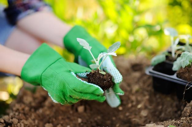 Donna che pianta le piantine a letto nel giardino al giorno soleggiato di estate Foto Premium