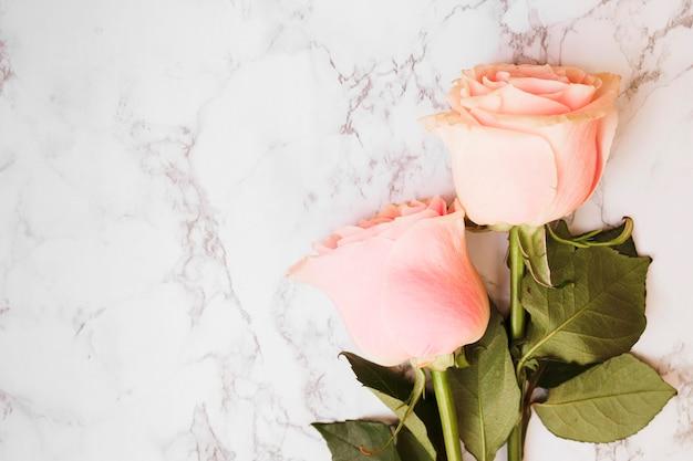 Due Belle Rose Rosa Su Sfondo Con Texture Di Marmo Scaricare Foto