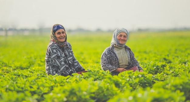 Due lavoratrici che lavorano e che sorridono in una piantagione di tè. Foto Gratuite