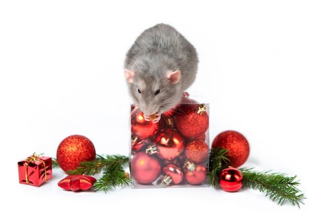 Dumbo di topo affascinante con decorazioni natalizie. 2020 anno del ratto. rametti di abete rosso, palle di natale rosse. capodanno cinese. Foto Premium