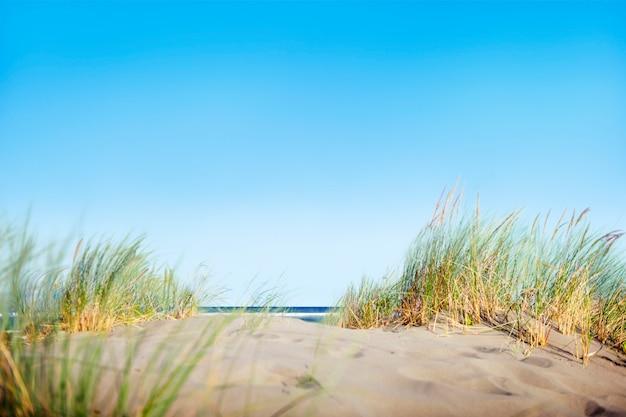 Dune di sabbia con erba sulla spiaggia Foto Gratuite