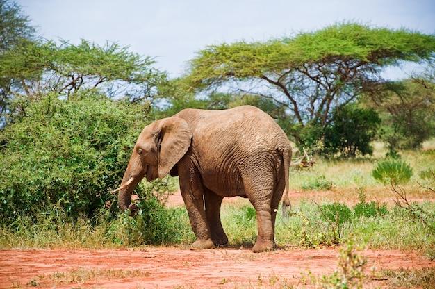 Elefante nella savana Foto Premium