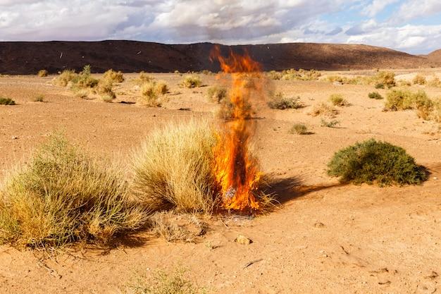 Erba bruciante di bush nel deserto del sahara, marocco Foto Premium