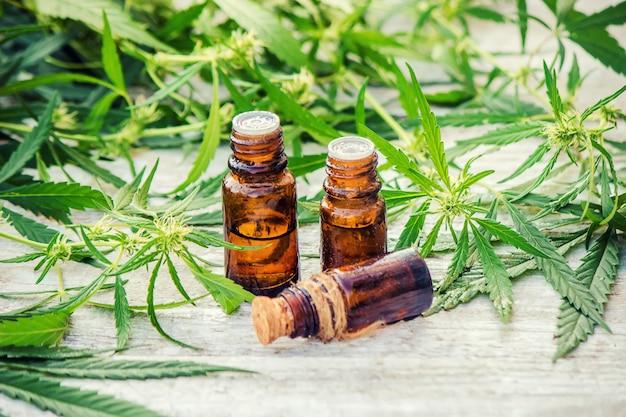 Erba di cannabis e foglie per brodo di trattamento, tintura, estratto, olio. messa a fuoco selettiva Foto Premium