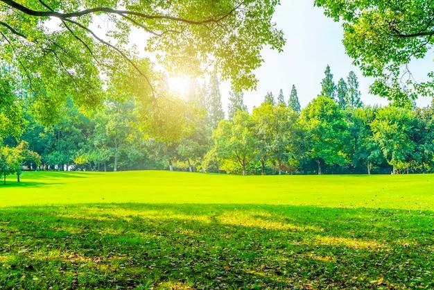 Erba e boschi verdi nel parco Foto Premium