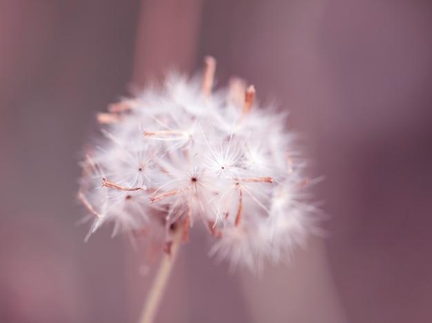 Erba variopinta dei fiori fatta con il gradiente per priorità bassa Foto Premium