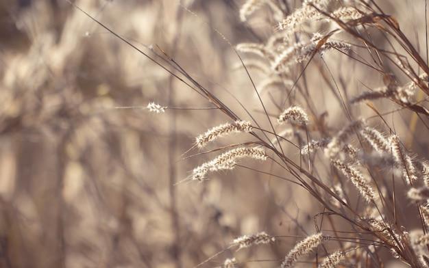 Erba variopinta dei fiori fatta con il gradiente per priorità bassa. Foto Premium