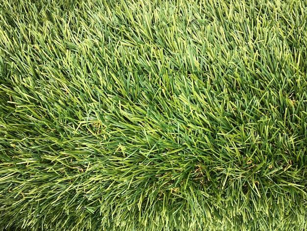 Erba verde artificiale fatta da plastica Foto Premium