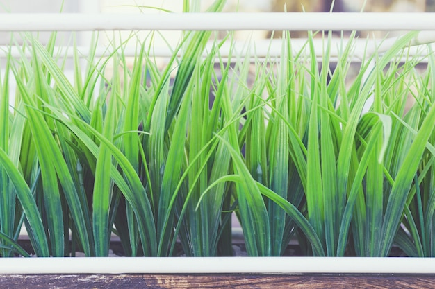 Erba verde artificiale in plastica Foto Premium