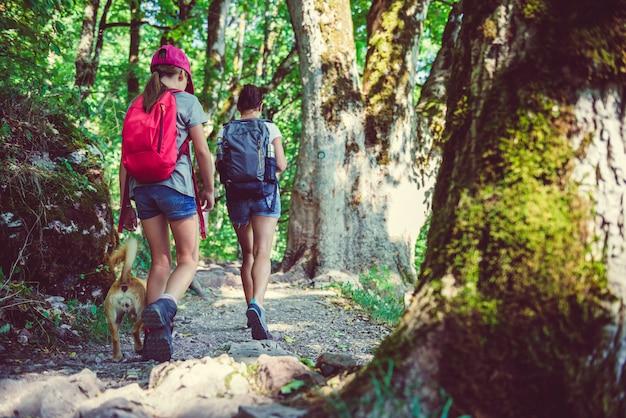 Escursioni nella foresta Foto Premium