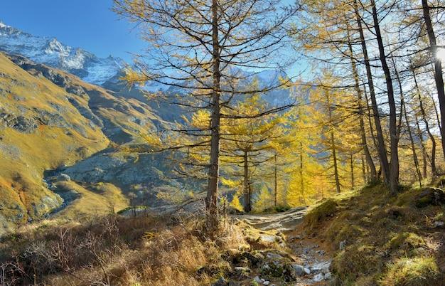 Escursioni tra bellissimi larici dorati in autunno in montagna alpina e innevata Foto Premium