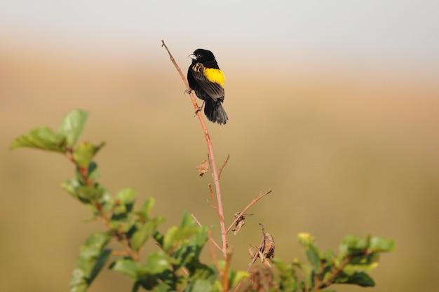Esotico uccello nero seduto su un piccolo ramo Foto Gratuite