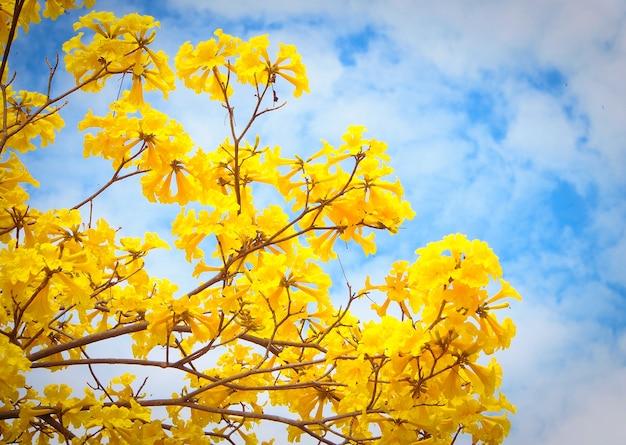 Estate Primavera Sfondo Fiori Gialli Sullalbero Scaricare Foto