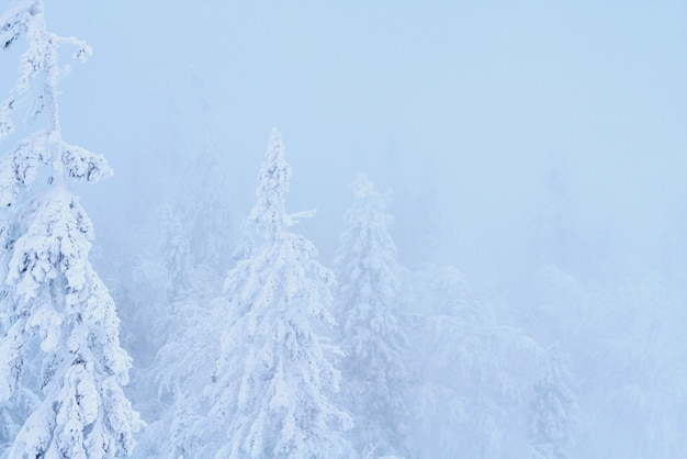 Fabulous christmas winter forest snow on everything Foto Premium