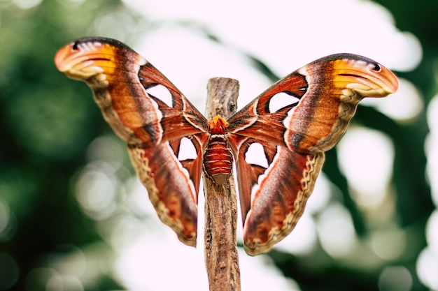 Falena colorata su un ramo Foto Gratuite