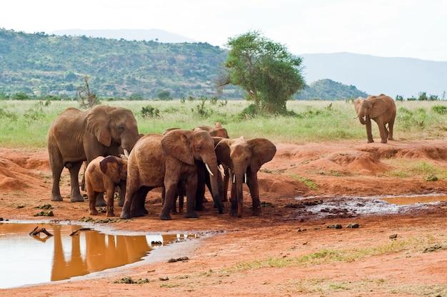 Famiglia di elefanti vicino a un abbeveratoio. Foto Premium