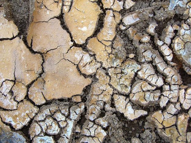 Fango senz'acqua, con diverse fessure sulla superficie. Foto Premium