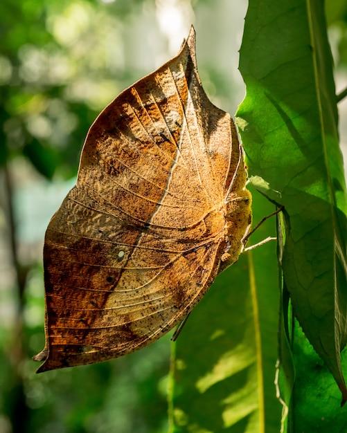 Farfalla che appende sulla foto dell'insetto alta vicina della foglia verde Foto Premium