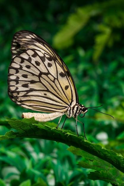 Farfalla che si siede sulla foglia con sfondo di fogliame Foto Gratuite