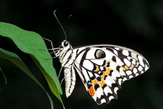 Farfalla colorata pallida su foglia Foto Gratuite