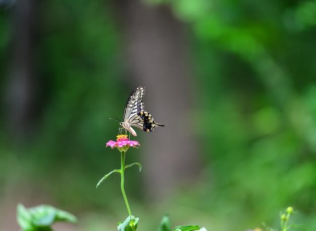 Fotografia , che passione ... - Pagina 5 Farfalla-con-sfondo-sfocato_1112-624