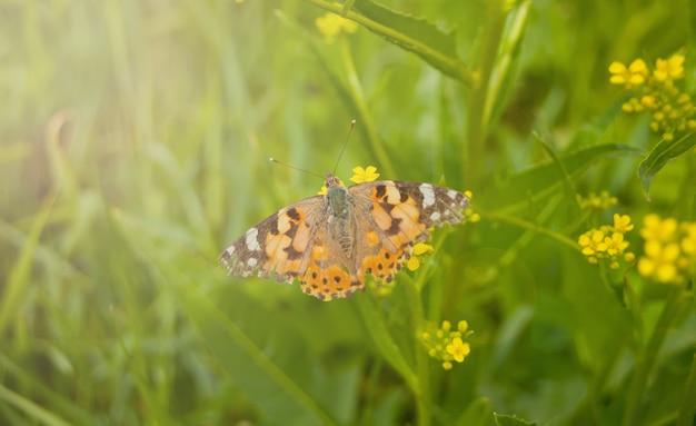 Farfalla di primavera su un fiore Foto Premium