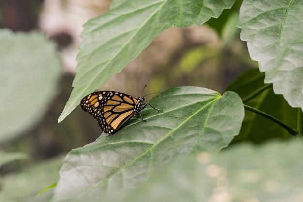 Farfalla di vista laterale sulle foglie Foto Gratuite