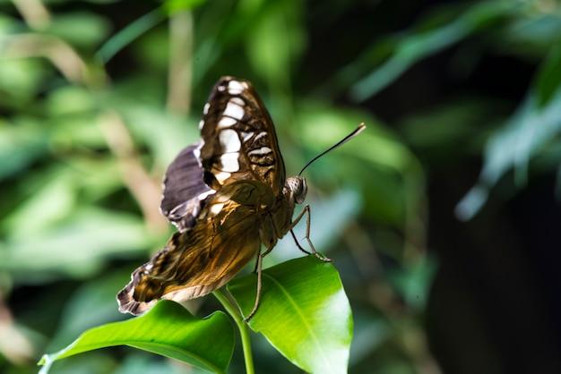 Farfalla fragile in habitat naturale Foto Gratuite
