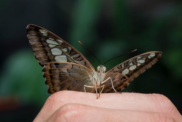 Farfalla marrone in piedi su una mano Foto Gratuite