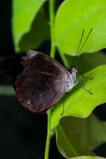 Farfalla nera nel suo habitat naturale Foto Gratuite