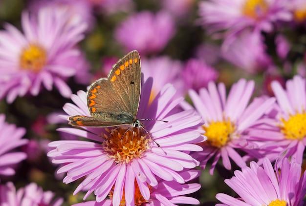 Farfalla su un fiore Foto Premium