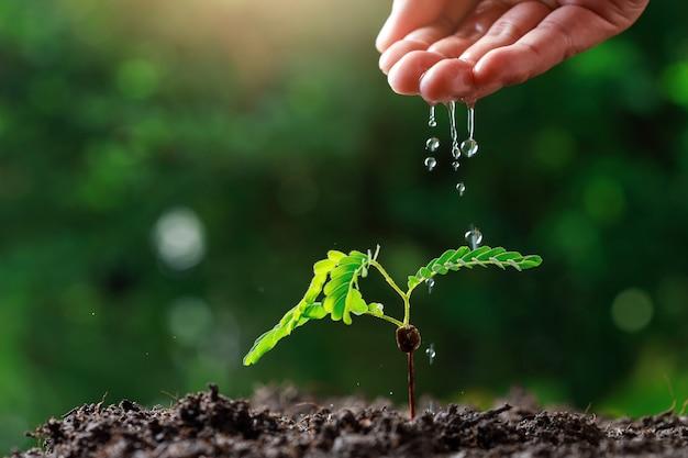 Farmer hand innaffiando le giovani piante del bambino Foto Premium