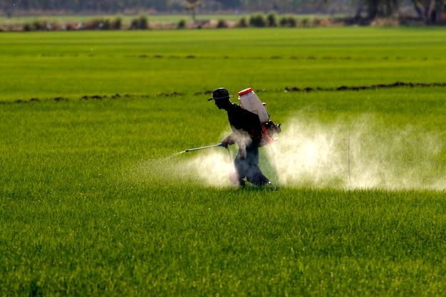 Farmer irrorazione di pesticidi in risaia Foto Premium