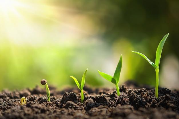 Fase di crescita della semina delle piante. concetto di agricoltura Foto Premium