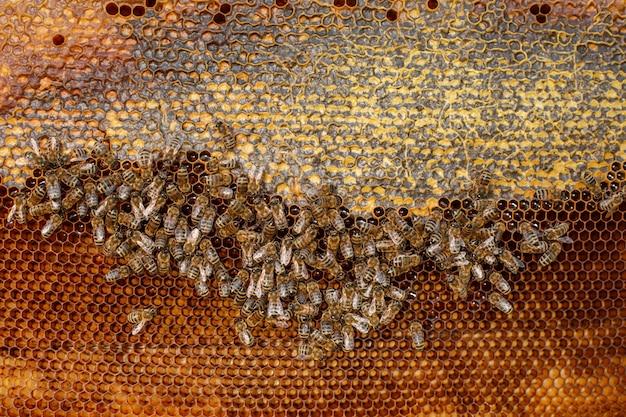 Favo alto vicino di colore naturale in alveare di legno con le api su. apicoltura. Foto Premium