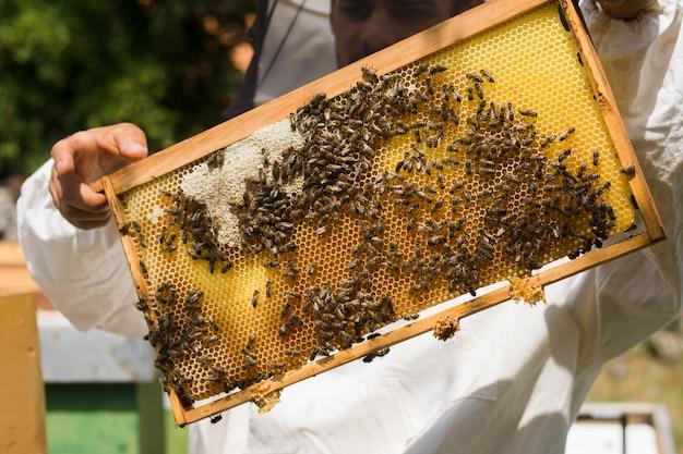 Favo con api Foto Gratuite