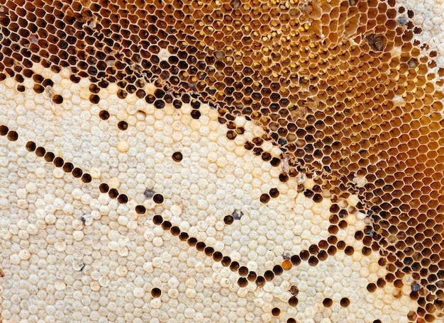 Favo con api Foto Premium