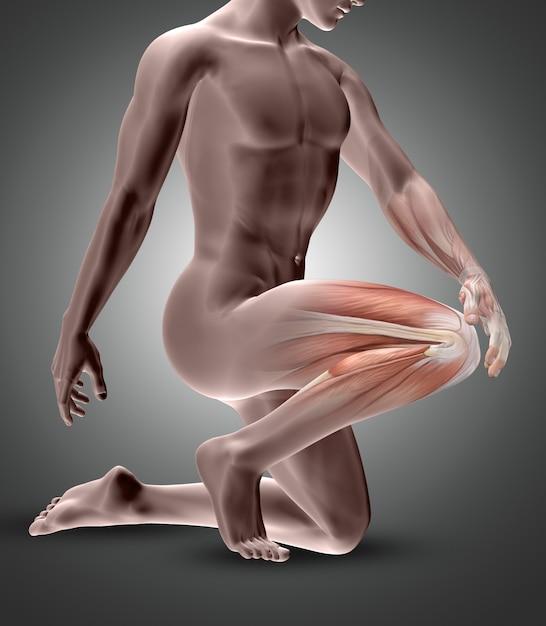 Figura maschile 3d con muscoli del ginocchio evidenziati Foto Gratuite