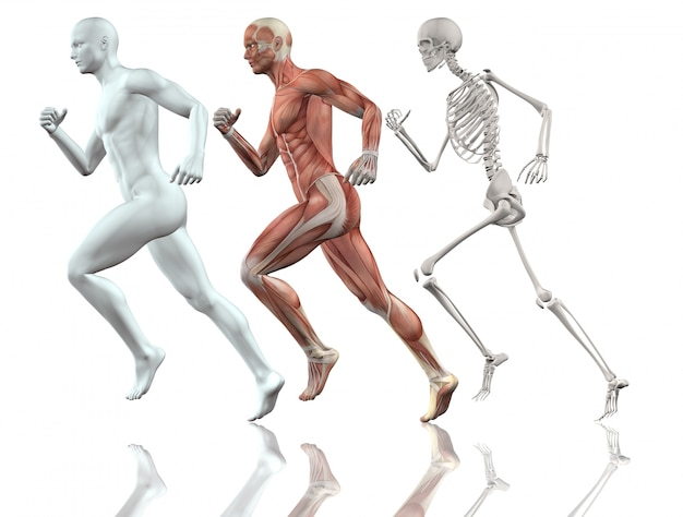 Figura maschile 3d in esecuzione con lo scheletro della pelle e dei muscoli mappa Foto Gratuite