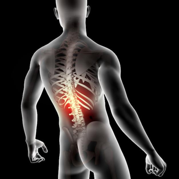 Figura medica maschio 3d con la spina dorsale evidenziata Foto Gratuite