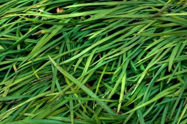 Fili d'erba texture hdr Foto Gratuite