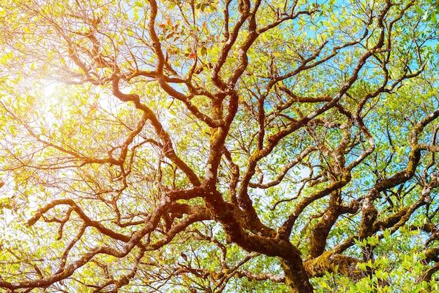 Filiale di albero con luce solare. sfondo naturale fresco sfondo astratto Foto Premium