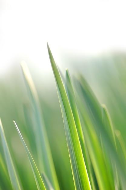 Filo d'erba Foto Gratuite