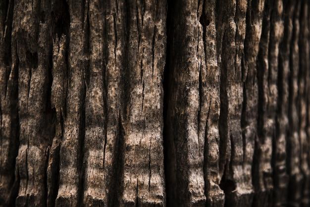 Fine di struttura del tronco di albero su Foto Gratuite