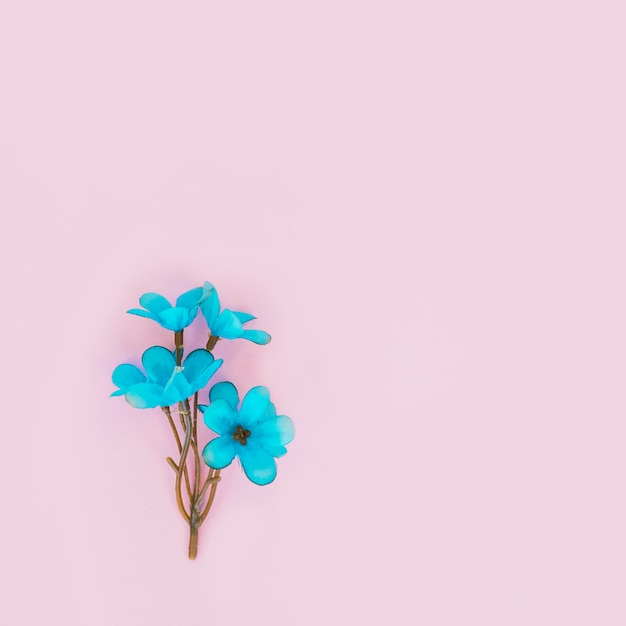 Fiore blu Foto Gratuite