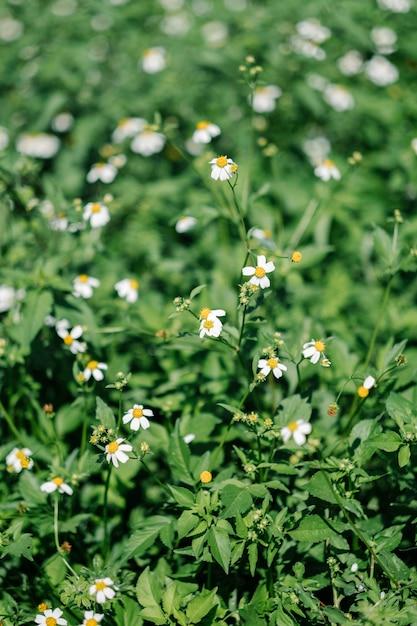 Fiore che sboccia Foto Gratuite