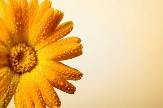 Fiore con gocce d 39 acqua scaricare foto gratis for Finestra con gocce d acqua