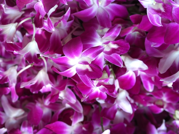 Fiore dell'orchidea del primo piano nel fondo del giardino di inverno Foto Premium