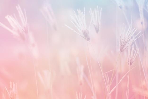 Fiore di colore dolce e pastello, foto di messa a fuoco morbida e sfocata in stile vintage Foto Premium