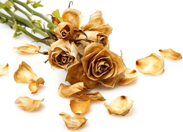 Fiore di rosa secco Foto Premium